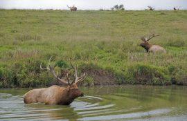 Ashland Wildlife Safari