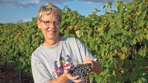 Feather River Vineyard at North Platte