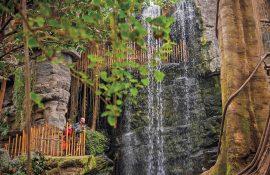Omaha - Zoo Rainforest
