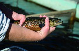 Rock Creek State Fish Hatchery